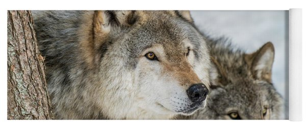 Timber Wolf Picture - Tw416 Yoga Mat
