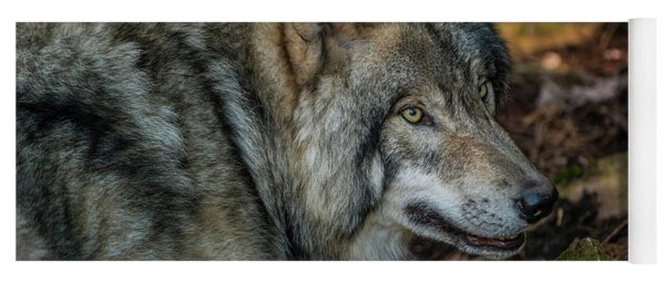 Timber Wolf Picture - Tw417 Yoga Mat