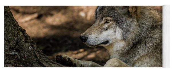Timber Wolf Picture - Tw418 Yoga Mat