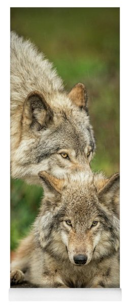 Timber Wolf Picture - Tw419 Yoga Mat