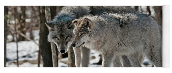 Timber Wolf Picture - Tw67 Yoga Mat