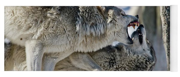 Timber Wolf Picture - Tw68 Yoga Mat