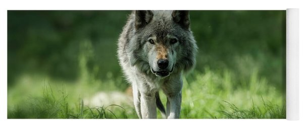 Timber Wolf Picture - Tw69 Yoga Mat