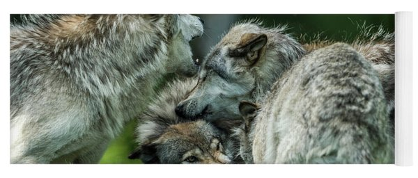 Timber Wolf Picture - Tw70 Yoga Mat