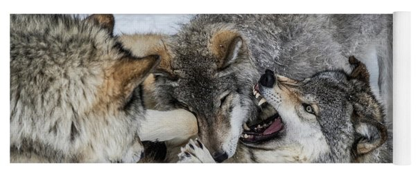 Timber Wolf Picture - Tw71 Yoga Mat