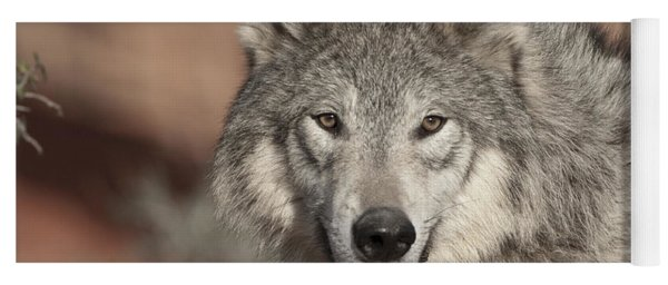Timber Wolf Portrait Yoga Mat