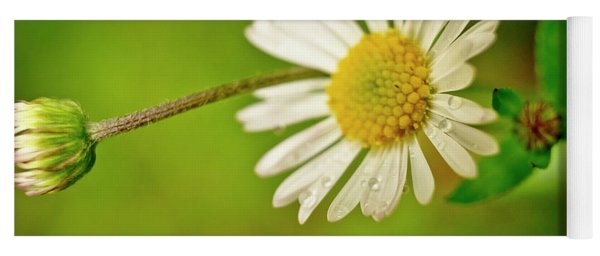 Tiny Daisy And Raindrops. Yoga Mat