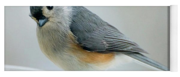 Titmouse With Walnuts Yoga Mat