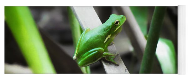 Tree Frog Yoga Mat