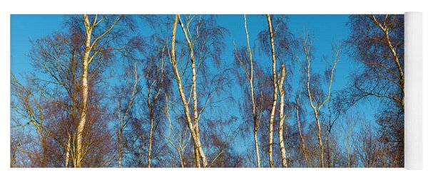 Trees And Blue Sky Yoga Mat