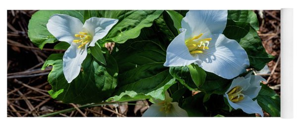 Trillium Bouquet In The Woods  Yoga Mat