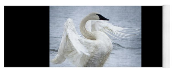 Yoga Mat featuring the photograph Trumpeter Swan - Misty Display 2 by Patti Deters