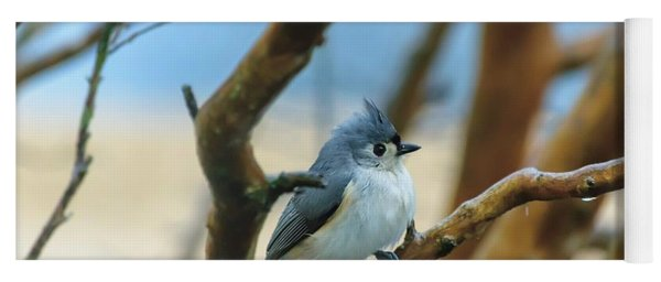Tufted Titmouse In Tree Yoga Mat