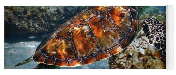 Turtle And Shark Swimming At Ocean Reef Park On Singer Island Florida Yoga Mat
