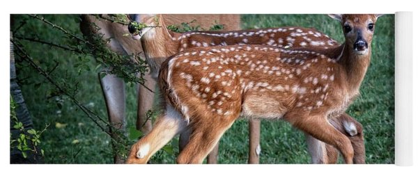 Twin Whitetail Fawns Yoga Mat