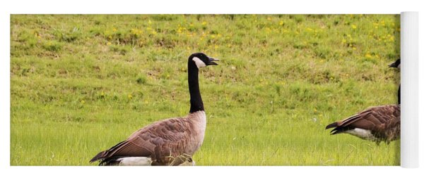 Two Canada Geese In Green Field Yoga Mat