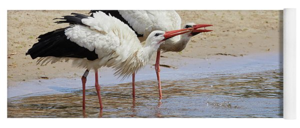Two Drinking White Storks Yoga Mat