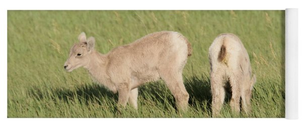 Two Ewes In The Badlands Yoga Mat