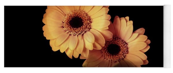 Two Gerberas Light And Shadow Yoga Mat