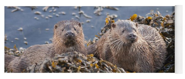 Two Young European Otters Yoga Mat