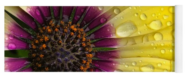 Daisy Up Close  Yoga Mat