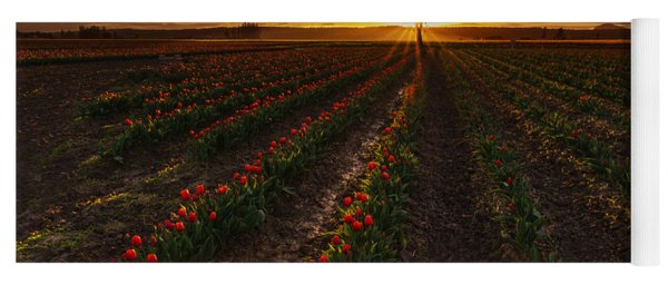 Vibrant Red Rows Of Tulips In Skagit At Sunset Yoga Mat