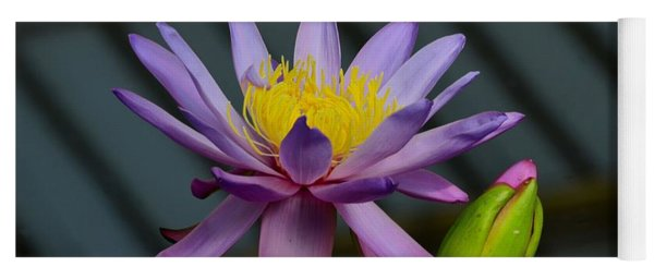 Violet And Yellow Water Lily Flower With Unopened Bud Yoga Mat