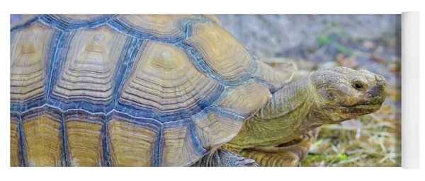Yoga Mat featuring the photograph Walking Turtle by Raphael Lopez