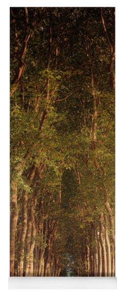 Warm French Tree Lined Country Lane Yoga Mat