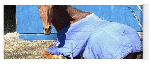 Warm Winter Day At The Horse Barn Yoga Mat