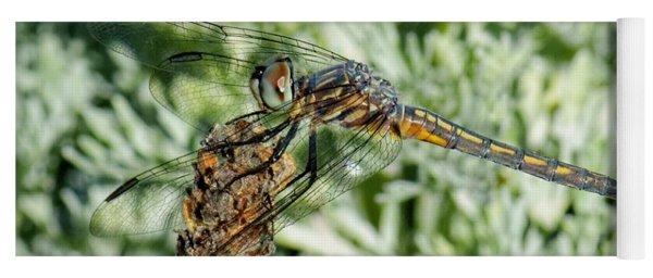Warming-up - Darner Dragonfly Yoga Mat