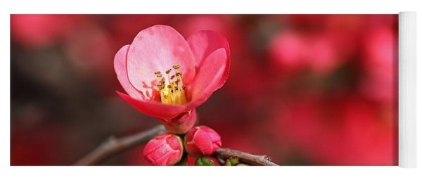 Warmth Of Flowering Quince Yoga Mat