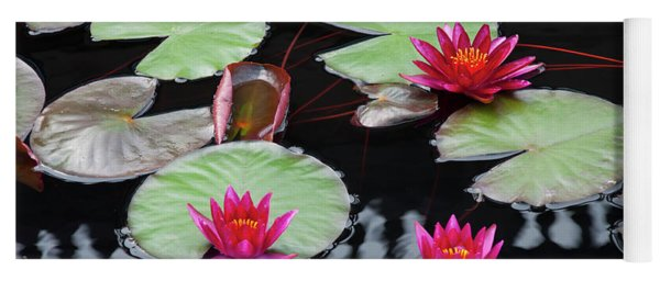 Water Lillies In Longwood Gardens Chester County Pa Yoga Mat