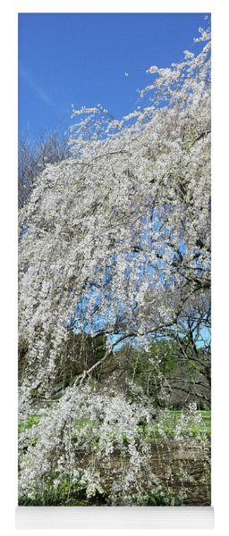 Weeping Cherry Starting To Bloom Yoga Mat