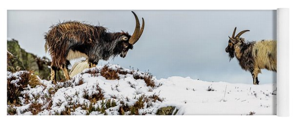 Welsh Mountain Goats Yoga Mat