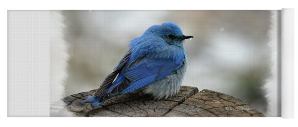 Western Bluebird On Cold Day Yoga Mat