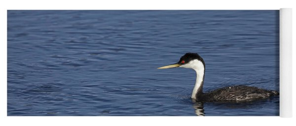 Western Grebe In Late Afternoon Light Yoga Mat