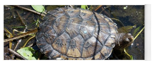 Western Pond Turtle, Actinemys Marmorata Yoga Mat