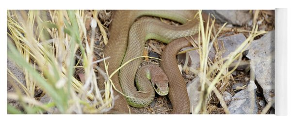 Western Yellow-bellied Racer, Coluber Constrictor Yoga Mat