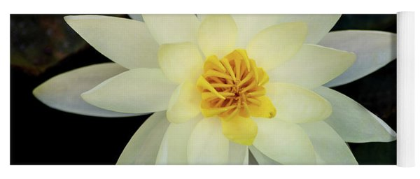 White And Yellow Water Lily Yoga Mat