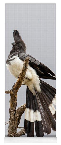 White-bellied Go-away Bird Yoga Mat