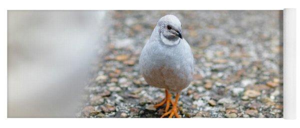 White Bird Sneaking Through Yoga Mat