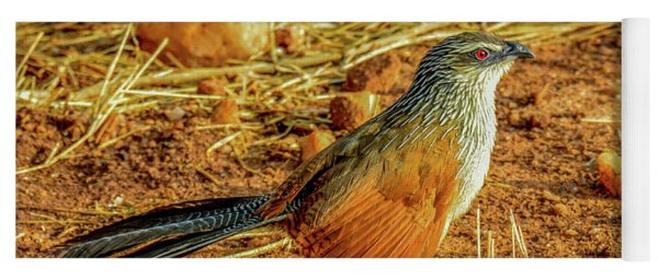 White-browed Coucal Yoga Mat