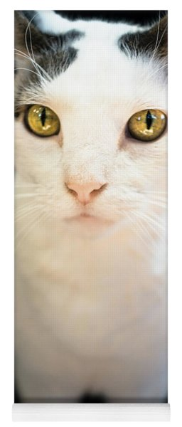 White Cat With Gold Eyes Yoga Mat