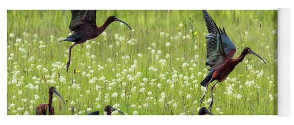 Yoga Mat featuring the photograph White-faced Ibis Rising, No. 1 by Belinda Greb