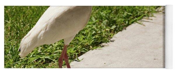 White Ibis Walking Down The Street Yoga Mat