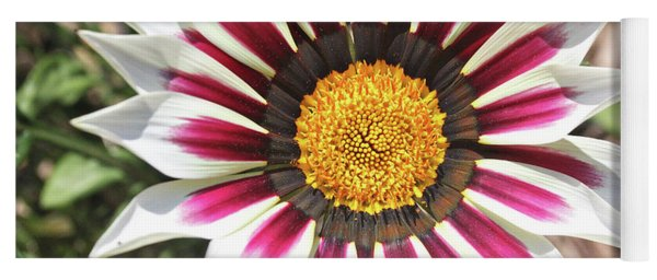 Yoga Mat featuring the photograph White Striped Gazania by Trina Ansel