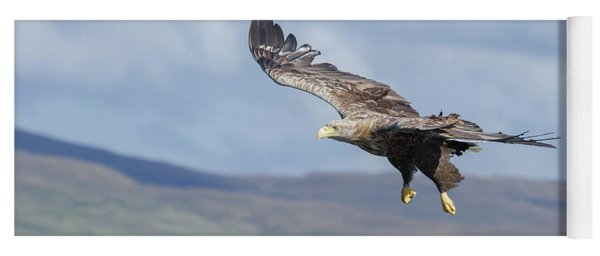 White-tailed Eagle On Mull Yoga Mat