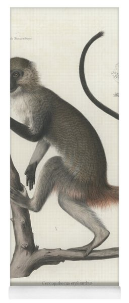 White Throated Guenon, Cercopithecus Albogularis Erythrarchus Yoga Mat