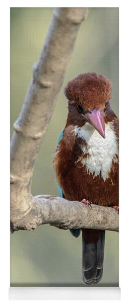 White-throated Kingfisher 01 Yoga Mat